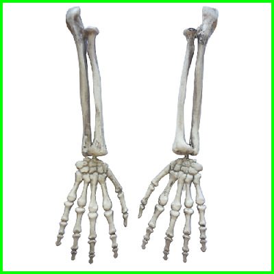 Halloween Horror Skeleton Arms Life Size Human Left Right New