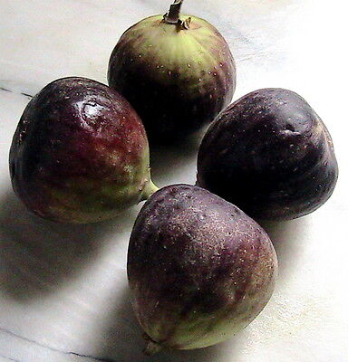 Wide Variety of Hot Climate Fruit Seeds -You Can Choose