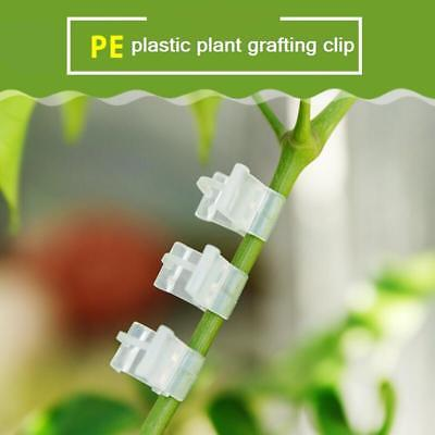 100Pcs PE Rubber and Plastic Plant Grafting Clips for Garden Vegetable Flower