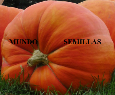 CALABAZA GIGANTE  atlantic giant  22 semillas seeds graines