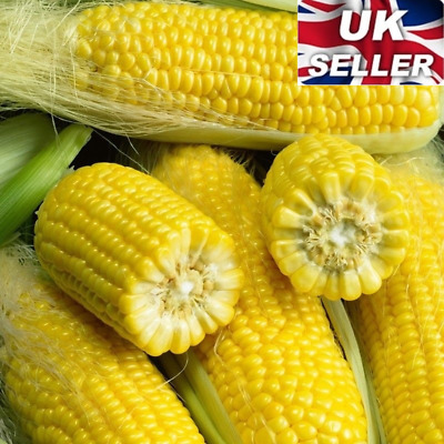 20 Finest Seeds Vegetable Sweet Corn Sweetcorn Organic Yellow Garden Home DIY UK