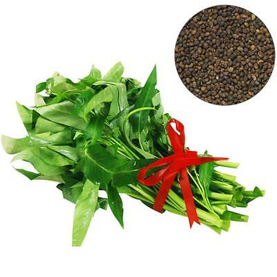 400PCS/Bag Vegetable Garden Seeds Water Kang Plant Leaf Green Spinach Seeds