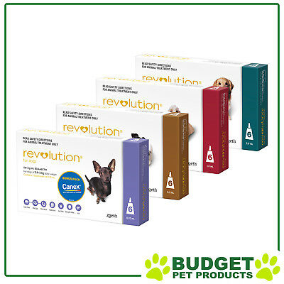 Revolution With Canex Flea Heartworm & Worm Treatment For Dogs - 6 Pack