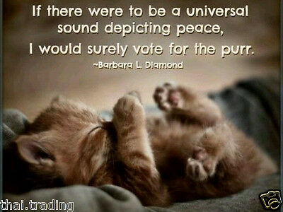 """Cute Cat Quote Lovely Pet Animal Photo Fridge Magnet 2""""x3"""" Collectibles"""