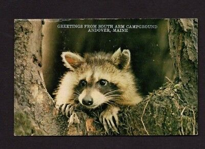 Postcard 1983 Greetings from South Arm Campground, Andover ME *5243