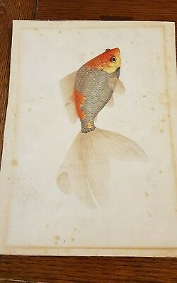 Antique Chinese painting of a Goldfish Koi