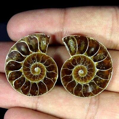 47.20Cts. NATURAL AMMONITE FOSSIL DESIGNER MATCH PAIR FANCY SHAPE GEMSTONE