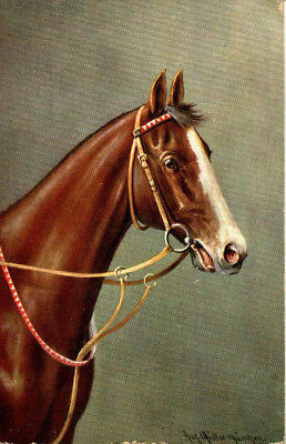 1910 postcard Horses head with harness by Muller Munchen