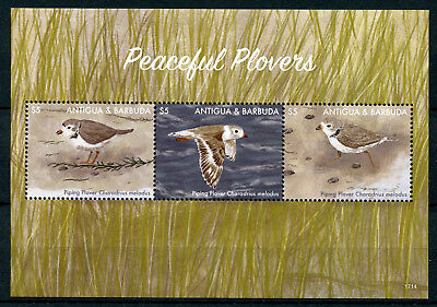 Antigua & Barbuda 2017 MNH Peaceful Plovers Piping Plover 3v M/S Birds Stamps