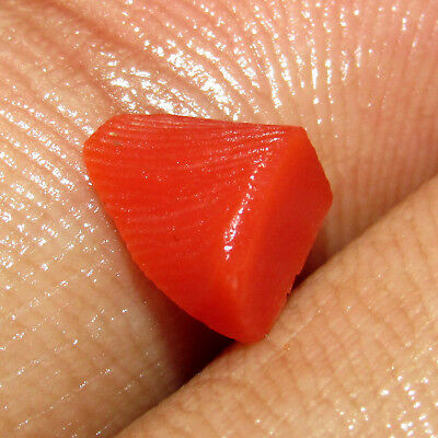 Awesome 1.00Cts Natural Rough Shaped 100% Real & Pure Red Coral Gemstone CH 6977