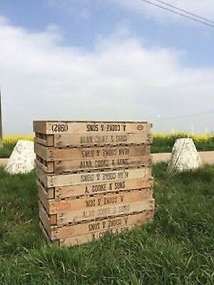 10 vintage potato chitting trays/crates
