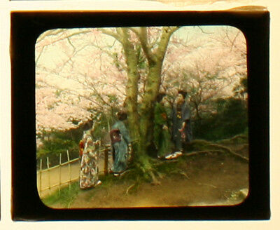 Japanese Women, Traditional Dress, Cherry Blossoms.hand Color Photo On Glass.