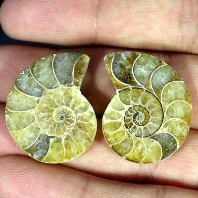 53.30Cts. AMMONITE FOSSIL DESIGNER MATCH PAIR FANCY SHAPE RARE GEMSTONE