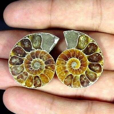 52.40Ct. Natural Ammonite Fossil Designer Match Pair Fancy Shape Gemstone