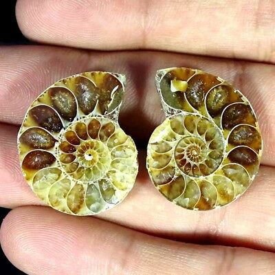 46.60Cts. NATURAL AMMONITE FOSSIL DESIGNER MATCH PAIR FANCY SHAPE GEMSTONE