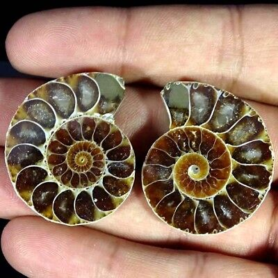 84.40Cts. AA+ AMMONITE FOSSIL DESIGNER MATCH PAIR FANCY SHAPE GEMSTONE