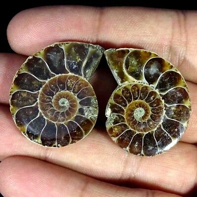 71.70Cts. AA+ AMMONITE FOSSIL DESIGNER MATCH PAIR FANCY SHAPE GEMSTONE