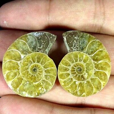 60.70Cts. NATURAL AMMONITE FOSSIL DESIGNER MATCH PAIR FANCY SHAPE GEMSTONE