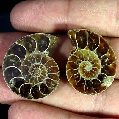 52.60Ct. Natural Ammonite Fossil Designer Match Pair Fancy Shape Gemstone