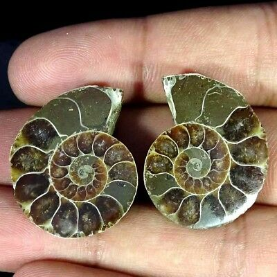 55.10Ct. Natural Ammonite Fossil Designer Match Pair Fancy Shape Gemstone