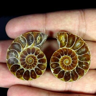 72.40Cts. NATURAL AMMONITE FOSSIL DESIGNER MATCH PAIR FANCY SHAPE GEMSTONE