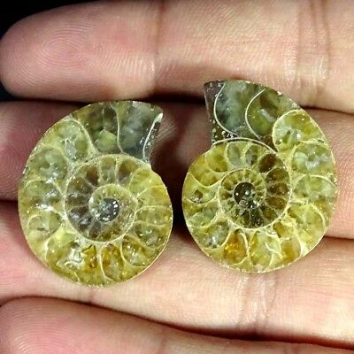 54.30Ct. Natural Ammonite Fossil Designer Match Pair Fancy Shape Gemstone