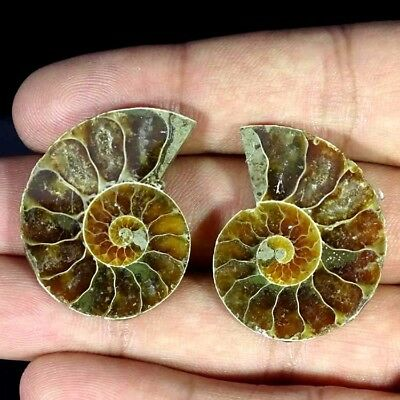 51.00Cts. BEST AMMONITE FOSSIL DESIGNER MATCH PAIR FANCY SHAPE GEMSTONE