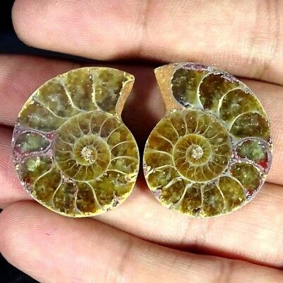 63.20Cts. BEST AMMONITE FOSSIL DESIGNER MATCH PAIR FANCY SHAPE GEMSTONE