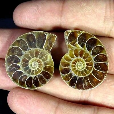 63.20Cts. AA+ AMMONITE FOSSIL DESIGNER MATCH PAIR FANCY SHAPE GEMSTONE