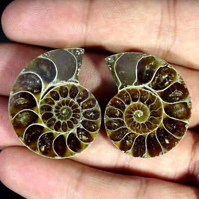 74.30Ct. Natural Ammonite Fossil Designer Match Pair Fancy Shape Gemstone