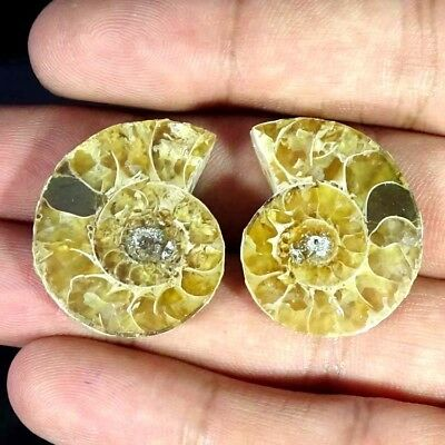 55.20Cts. AMMONITE FOSSIL DESIGNER MATCH PAIR FANCY SHAPE FINE GEMSTONE