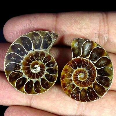 68.40Cts. BEST AMMONITE FOSSIL DESIGNER MATCH PAIR FANCY SHAPE GEMSTONE