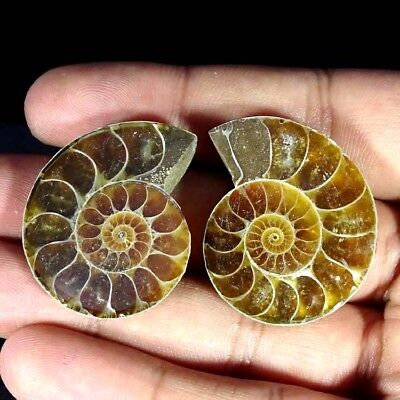 95.00Cts. AMMONITE FOSSIL DESIGNER MATCH PAIR FANCY SHAPE FINE GEMSTONE