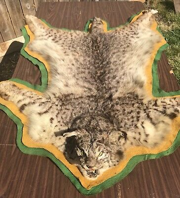 Bobcat Mounted Pelt/hide Taxidermy Fur Claws Paws Head Open Mouth Lynx Full