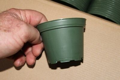 "4""  green azalea pots set of 10"