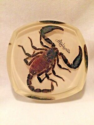 Real Scorpion In Clear Acrylic Paperweight - Malaysia