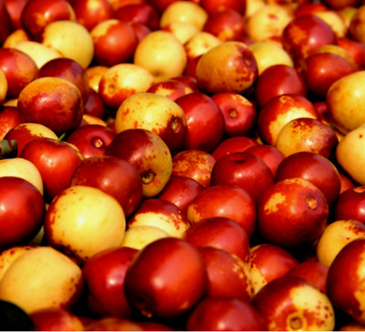 Red Jujube Seed Plant Nutrition Fruit Exotic Delicious Potted Bonsai Decor 10pcs