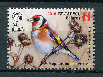 Belarus 2018 MNH Goldfinch Birdlife International 1v Set Finches Birds Stamps