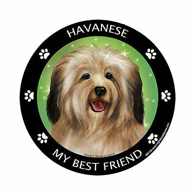 My Havanese Is My Best Friend Dog Car Magnet