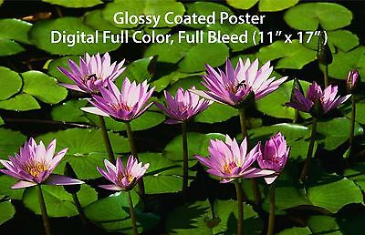 """Digital Full Color Poster (11"""" x 17"""") on 100# Glossy Coated text, Full Bleed"""