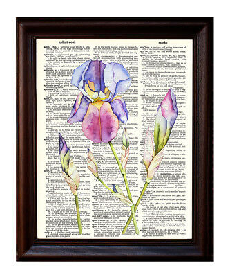 Iris Watercolor - Dictionary Art Print Printed On Authentic Vintage Dictionary