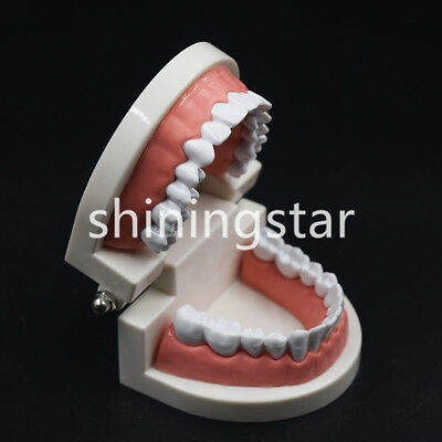 1*Dental Standard Teeth Model Teaching Adult Study Typodont Demonstration