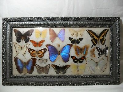 Real preserved butterfly framed collection colorful rare unique