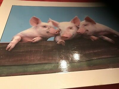 New Postcard -front Has Picture of pigs