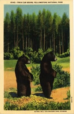 Dr Jim Stamps Us Twin Bear Cubs Linen Postcard Yellowstone National Park