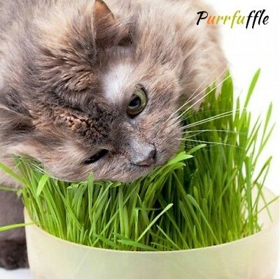 Organic Sweet Oat Cat Grass Seeds Grow Your Own Cat Grass Aids Digestion