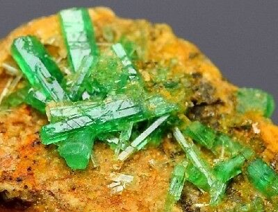 600CT Natural rare terminated Emerald crystals bunch mineral gemstone specimen