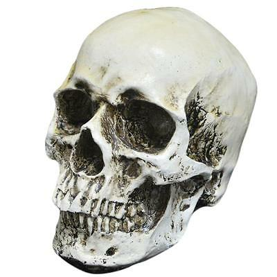Resin Replica 1:1 Life Size Human Head Skull Scary Skeletons Halloween Decoral