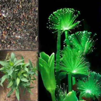 100 Pcs Rare Emerald Fluorescent Flower Seeds Night Light Emitting Plants Garden