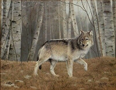 Watchful by Charles Frace Grey Wolf Print 32.5x26.25